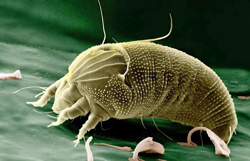 Le comprimé contre les parasites dans lorganisme de la personne